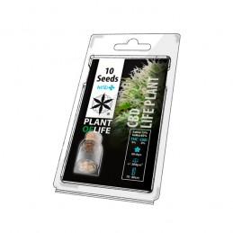 CBD LIFE PLANT 10 SEEDS