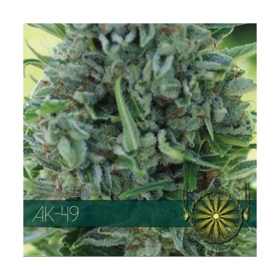 AK49 3 AUTO SEEDS - VISION