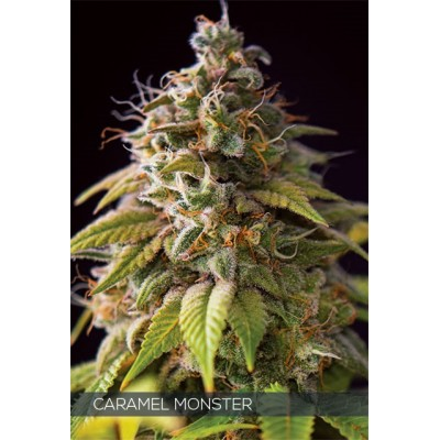 Caramel Monster FEM 3 Seeds...
