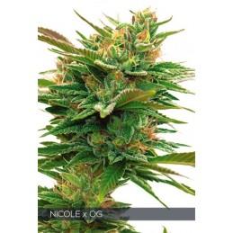 Nicole X OG FEM 3 Seeds -...