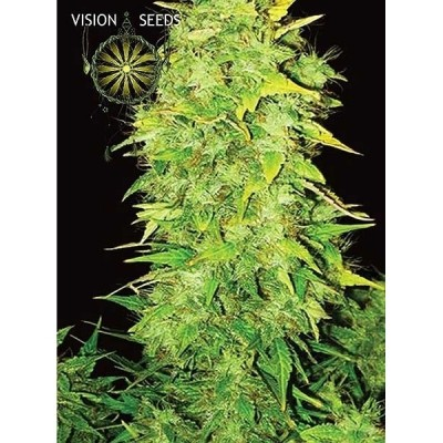 White Widow Auto 3 Seeds -...