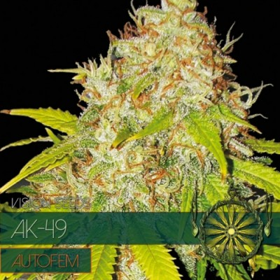 AK49 5 AUTO SEEDS - VISION