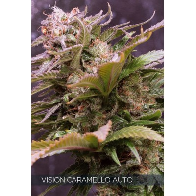 Caramello Auto 5 Seeds -...