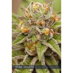 Pure Gelato FEM 5 Seeds –...
