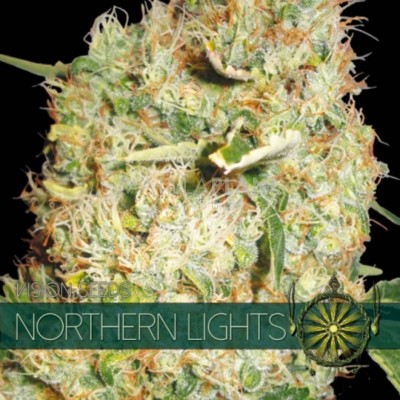 Northern Lights FEM 5 Seeds...