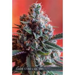 DARK STAR x AK-49 5 FEM...