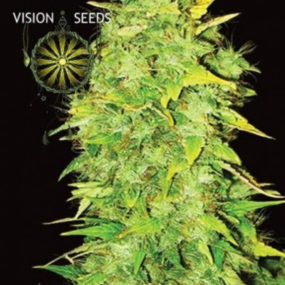 White Widow Auto 5 Seeds –...