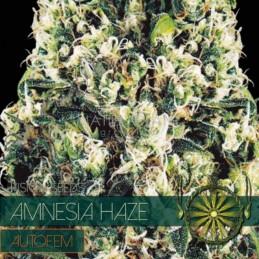 Amnesia Haze Auto 5 Seeds –...
