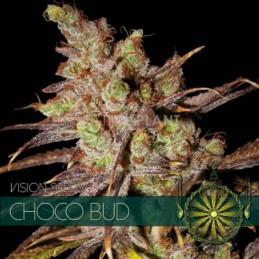 Choco Bud FEM 3 Seeds – Vision