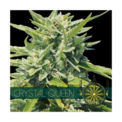 Crystal Queen  FEM 5 Seeds...