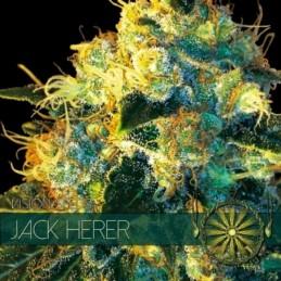 JACK HERER 3 FEM SEEDS –...