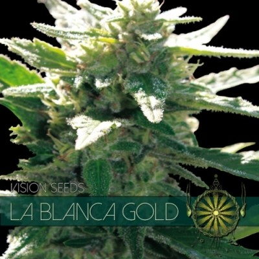 LA BLANCA GOLD 5 FEM SEEDS...