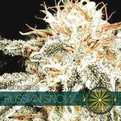 Russian Snow FEM 5 Seeds –...
