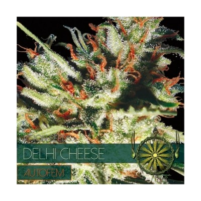 Delhi Cheese Auto 10 Seeds...