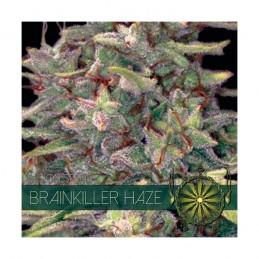BRAINKILLER HAZE 5 FEM...