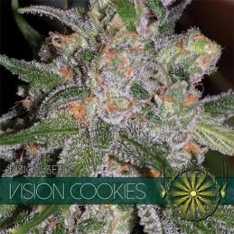 Cookies FEM 5 Seeds – Vision