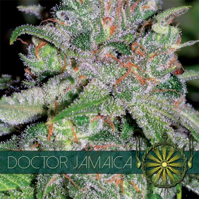 Doctor Jamaica FEM 3 Seeds...