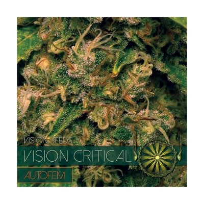 CRITICAL AUTO 5 SEEDS – VISION