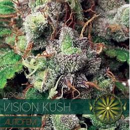 Kush Auto 5 Seeds – Vision