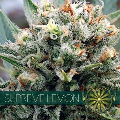 Supreme Lemon FEM 5 Seeds –...
