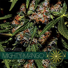 MIGHTY MANGO 3 FEM SEEDS –...