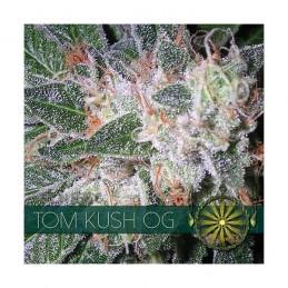 TOM KUSH 5 FEM SEEDS – VISION